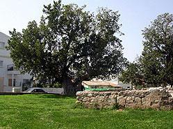 Азур. Фотография с сайта azor.muni.il